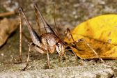 A long-horned grasshopper — Stock Photo