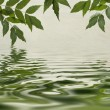 Green leaves reflecting in the water — Stock Photo #6247766