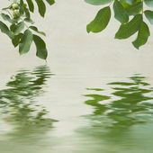 Green leaves and chestnuts reflecting in the water — Stock Photo