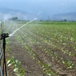 Royalty-Free Stock Photo: Irrigation