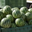Stock Photo: Watermelons in large crates