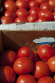 Tomatoes in boxes in Wholesale market — Stok fotoğraf