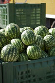 Watermelons in large crates — Stock Photo