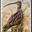 Royalty-Free Stock Photo: Eurasian Curlew on a Postage Stamp from Equatorial Guinea