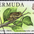 Whistling Frog Postage Stamp — Stock Photo