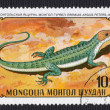 Mongolian Lizard Stamp — Stock Photo