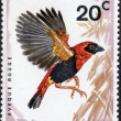 Southern Red Bishop Stamp - Stock Photo