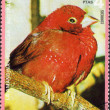 Red-billed Firefinch Stamp - Stock Photo