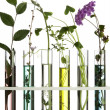 Flowers and plants in test tubes — ストック写真 #5966614