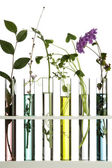 Flowers and plants in test tubes — Stock Photo