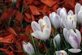 Blüten — Stock fotografie