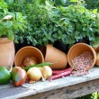 Gardener's harvest from the Garden - Stock Photo
