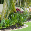 Tropical Garden Border — Stock Photo