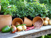 Gardener's harvest from the Garden — Stock Photo