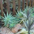 Stock Photo: Landscaped Back Yard