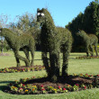 Stock Photo: Topiary Horses