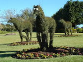 Topiary Horses — Stock Photo