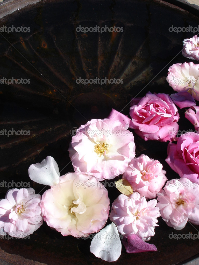 Floating roses in iron birdbath — Stock Photo #6210084