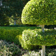 Topiary and Hedges — Stock Photo #6222093