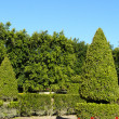 Topiary and Hedges — Stock Photo