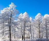Winter wooden landscape — Stock Photo