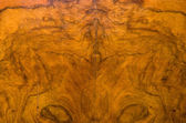 Walnut texture — Stock Photo