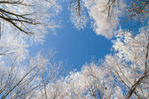 Winter wood framed sky — Stock Photo