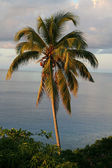 Seychelles panorama — Stock Photo