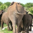 Elephants family going far away - 图库照片