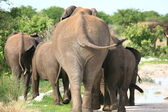 Elephants family going far away — 图库照片