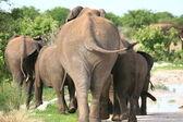 Famiglia di elefanti andando lontano — Foto Stock