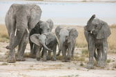 Elephants family — Stockfoto