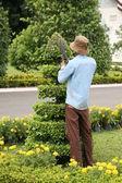 Gardener cutting tree — Stock Photo