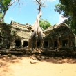 Ruins of ansient temple ang giant tree roots — Stock Photo