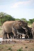 Elephants family taking bath — Stock Photo