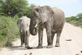 Elephants family — Stock Photo