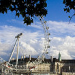 Stock Photo: London Eye from under trees