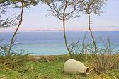 Vista da bela paisagem rural com um vaso — Foto Stock