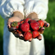 Handful of strawberries in hands — Stock Photo