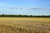 Empty field in rural areas — Stock Photo