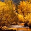 Golden fall colors reflecting into stream in the Yosemite Valley - Stock Photo