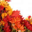 Autumn flowers placed in a pattern to form a border — Stock Photo #5978810