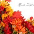 Autumn flowers placed in a pattern to form a border - Stock Photo