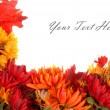 Stock Photo: Several autumn flowers placed in pattern to form border