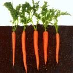 Carrots growing in soil — Stock Photo