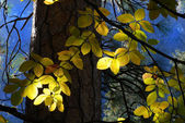 Sun streaming through forest lighting leaves of a tree — Stock Photo
