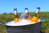 Bucket of beers on ice in a picnic setting — Stock Photo