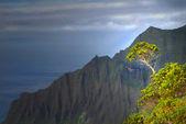Tree growing on a mountain on the Napali coast — Stock Photo