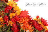 Autumn flowers placed in a pattern to form a border — Stock Photo