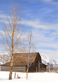 Mouton Barn in Teton National Park — Stock Photo